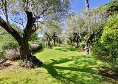 VP-gardens